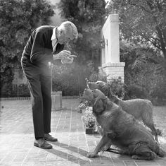 Actor Jimmy Stewart playing ball with his dogs in Los Angeles, Calif., 1970