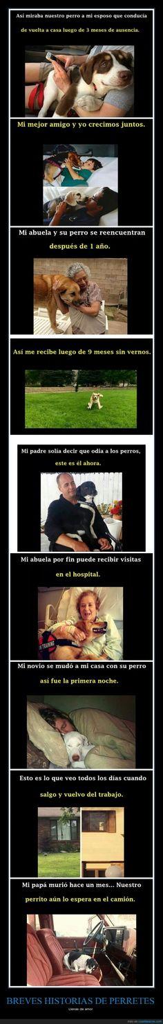 Nada tan auténtico como el amor de un perro - Llenas de amor Gracias a http://www.cuantarazon.com/ Si quieres leer la noticia completa visita: http://www.estoy-aburrido.com/nada-tan-autentico-como-el-amor-de-un-perro-llenas-de-amor/