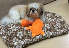Tutorial de confecção de cama para cachorro