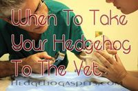 Nobody wants to take their hedgehog to the vet and have to pay expensive bills when there isn't even a problem. Here are common problems, that need a vets attention.