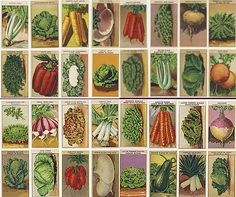 vintage vegetable seed packets (from France, like I care)
