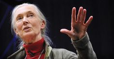 Jane Goodall hasn't found the missing link, but she's come closer than nearly anyone else. The primatologist says the only real difference between humans and chimps is our sophisticated language. She urges us to start using it to change the world.