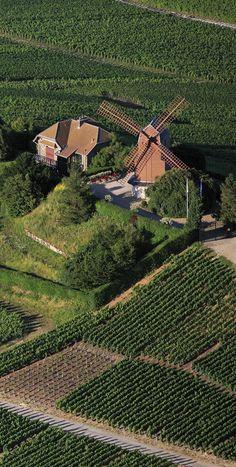 Verzenay (Marne) et son  moulin à vent construit en 1818.