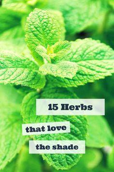 15 Herbs That Thrive In Shade --> http://www.hgtvgardens.com/herbs/15-herbs-that-grow-in-the-shade?soc=pinterest&utm_content=buffer1da6b&utm_medium=social&utm_source=pinterest.com&utm_campaign=buffer