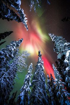 Snowy forest and Aurora near Fairbanks, Alaska --- by David Shaw Tourist come from all over the world to experience the Aurora. We always call it the Northern Lights but they are truly amazing. All Nature, Amazing Nature, Science Nature, Beautiful Sky, Beautiful Landscapes, Beautiful World, Landscape Photography, Nature Photography, Photography Tips