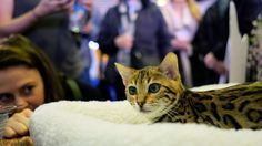 Dogs reach across the aisle and welcome their feline friends back to the annual event.