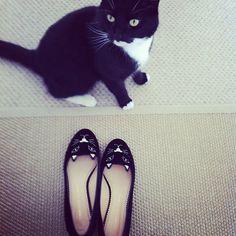 My cat + my kitties    www.mademoisellerobot.com