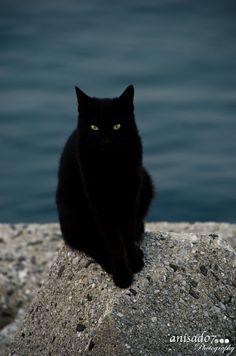 BLACK CAT - null                                                       …
