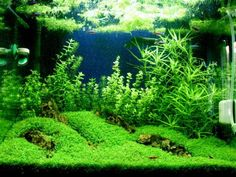AQUASCAPE IDEA 80