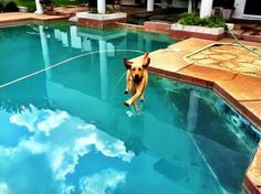 Photos Taken at the Right Moment, Funny Dog