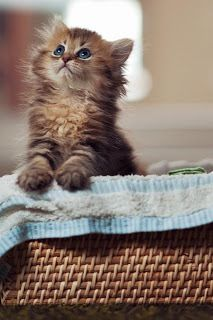 My life has not been the same without my kittens -