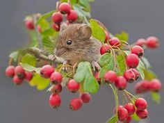 Mouse on brench