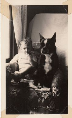 Vintage Photo Cute Boston Terrier Sitting With Baby Boy Best Friend Puppy Animal | eBay