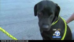 Family Comes Forward To Claim Heroic Dog