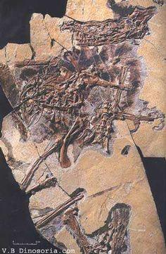 Fossile de Sinornithosaurus