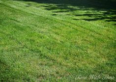 Totally Repair Dead Grass Spots Damaged By Dog Urine In 3 Easy Steps