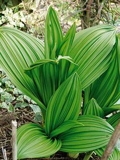 Planters, Garden, Tips, Ideas, Garten, Lawn And Garden, Gardens, Plant, Window Boxes
