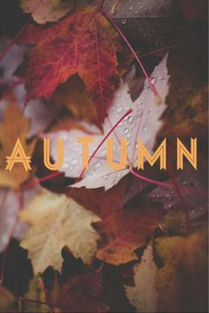 Autumn - Autumn arrives in early morning, but spring at the close of a winter day. Elizabeth Bowen