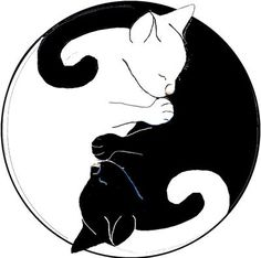 Yin-yang cats graphic