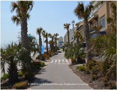 Pretty area of the Virginia Beach boardwalk with lots of palm trees