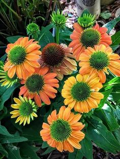 Flowers Gif, Beautiful Rose Flowers, Exotic Flowers, Amazing Flowers, Gerbera Daisy Care, Gerbera Jamesonii, Good Evening Messages, Types Of Flowers, Belleza Natural