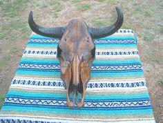 antiqued cow skull