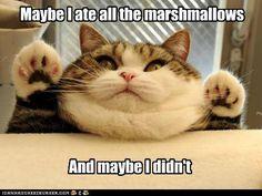 marshmallows @Beth Barnes @Sarah Weaver Harris