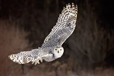 Indispensable bird photography tips to capture some awe inspiring action photos by pro photography Jane Palmer to memorize. Nature Photography Tips, Photography Articles, Amazing Photography, Landscape Photography, Dslr Or Mirrorless, Fast Shutter Speed, Underwater Photographer, Snowy Owl, Dark Backgrounds