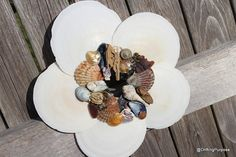 Check out this item in my Etsy shop https://www.etsy.com/listing/277054408/scallop-shell-wreath-with-various-shells