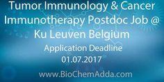 Tumor Immunology & Cancer Immunotherapy Postdoc Job @ Ku Leuven Belgium