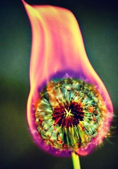 this is on my bucket list for summer! Set a dandilion on fire and it burns different colors! Too cool!