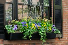 Fabulous Flowers for Winning Windows- plant a filler flower (to add fullness), a focal flower (to add height) and a falling flower (to overflow along the sides).