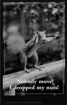 A squirrel in a quandary! :)