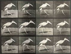 """Happy Birthday """"Eadweard Muybridge, Thief of Animal Souls"""" Animation Reference, Art Reference, Photo Reference, Eadweard Muybridge, Frankie Magazine, New Orleans Museums, Animal Graphic, Naive Art, Poses"""