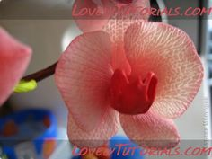 All types of orchids tutorials, pinner  has other good tutorials as well.