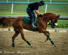 Colonial Downs 2013 Morning Workouts.