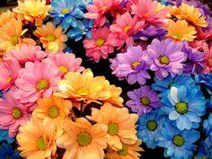 Guia jato: flores