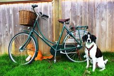 Pashley Princess Sovereign with dog. Would get one if Alex was this well behaved and could trot alongside.