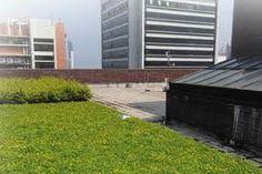 City green environment