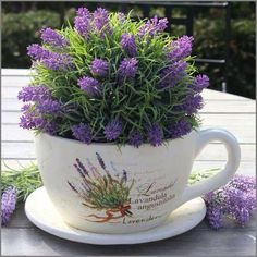 Raindrops and Roses Lavender Cottage, Lavender Garden, French Lavender, Lavender Blue, Lavender Fields, Lavender Flowers, Purple Flowers, Growing Lavender, Raindrops And Roses