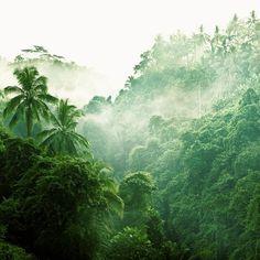 rainforest - bali, indonesia