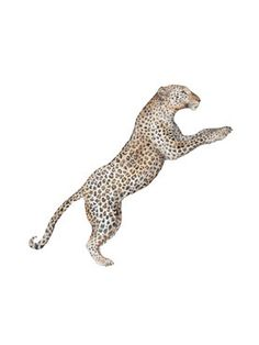 Leaping Leopard Watercolor by Lauren Rogoff on, - Anime Animals - Cat Wallpaper Leopard Print Wallpaper, Cat Wallpaper, Leopard Prints, Trendy Wallpaper, Animal Wallpaper, Leopard Tattoos, Lion Tigre, Cool Wallpapers For Phones, Anime Animals
