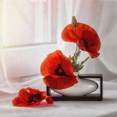 Three Poppies - null