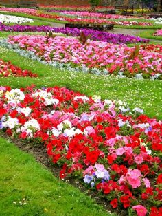 beautiful outdoor flowers | Picture of types of garden flowers