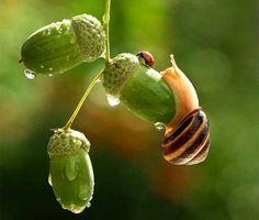 La Stampa - Ecco il fantastico mondo delle lumache in 20 foto