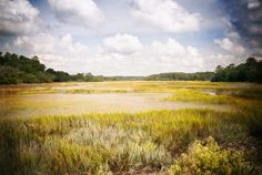 salt marsh in winter