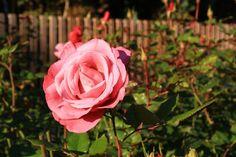 Making your garden l