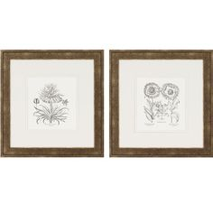 Paragon Flower Impressions Tordilion/Corona Set of Two Framed Print - 3392 Dining Room Art, Wall Art, Wall Decor, Frame, Settings, Cool Walls, All Wall, Framed Prints, Metal Wall Art