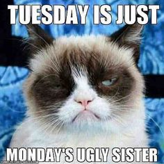 Tuesday is just Monday's ugly sister...lol!  Have a great day everyone!  #ItsTuesday #NotMonday #ShortWorkWeek #BeHappy #Smile #Laugh #LoveYourself #GreatDay #GrumpyTheCat