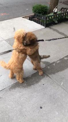 Super Cute Puppies, Cute Baby Dogs, Cute Little Puppies, Super Cute Animals, Cute Dogs And Puppies, Cute Little Animals, Cute Funny Animals, Funny Dogs, Cute Puppy Pics